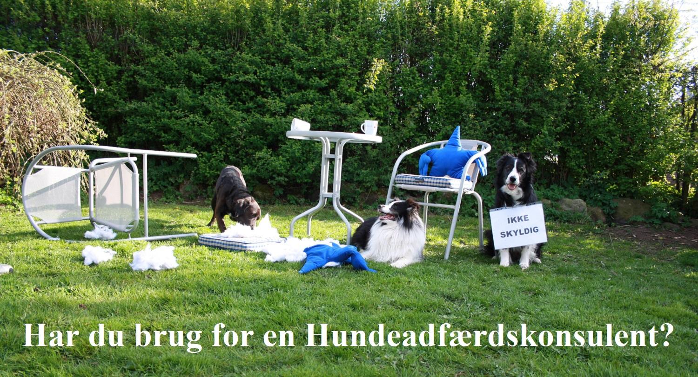 Hundeadfærdskonsulent
